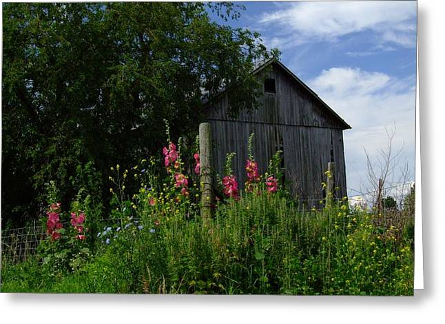 HollyHock Barn Greeting Card by Michael L Kimble
