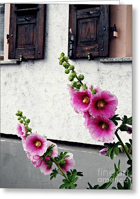 Organic Greeting Cards - Hollyhocks in Schierstein 1 Greeting Card by Sarah Loft
