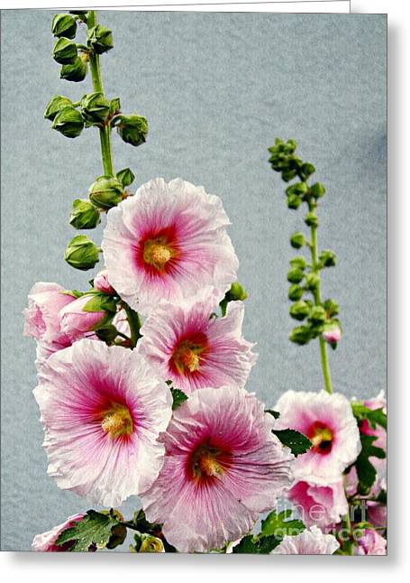Organic Greeting Cards - Hollyhocks in Schierstein 3 Greeting Card by Sarah Loft