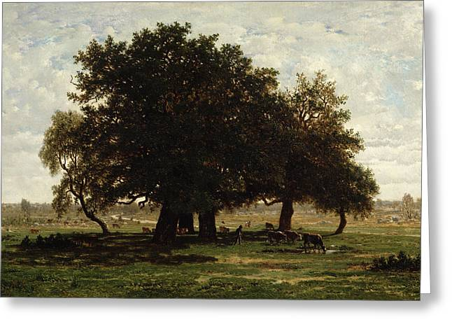 Oak Tree Paintings Greeting Cards - Holm Oaks Greeting Card by Pierre Etienne Theodore Rousseau