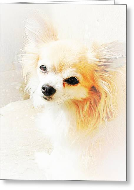 Puppy Digital Art Greeting Cards - Hols Greeting Card by Dorothy Berry-Lound