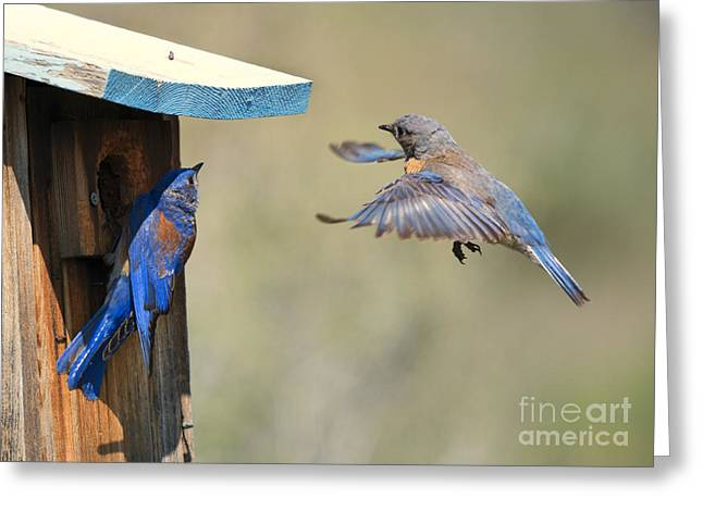 Bluebird Greeting Cards - Home Inspection Greeting Card by Mike Dawson