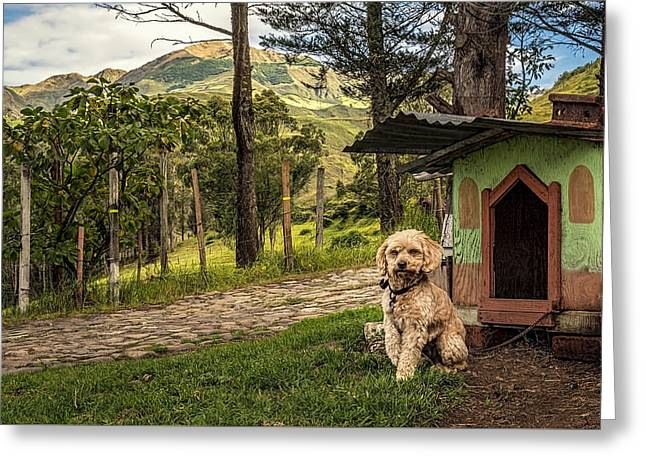 Shack Greeting Cards - Home Owner Greeting Card by Maria Coulson
