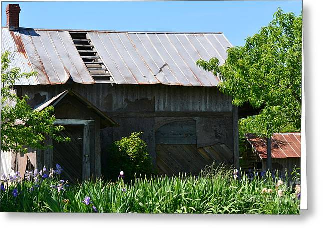 Red Roofed Barn Greeting Cards - Homes of the Past Greeting Card by Barbara Dalton