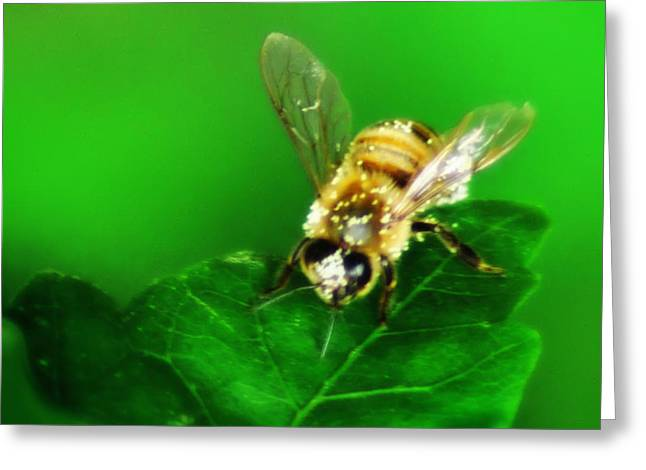 Yellow Jacket Greeting Cards - Honey Bee Greeting Card by Bill Cannon