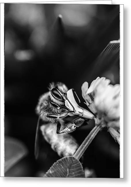 Sucking Greeting Cards - Honey Bee Greeting Card by James Bull