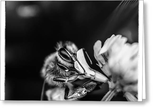Honey Bee Greeting Card by James Bull