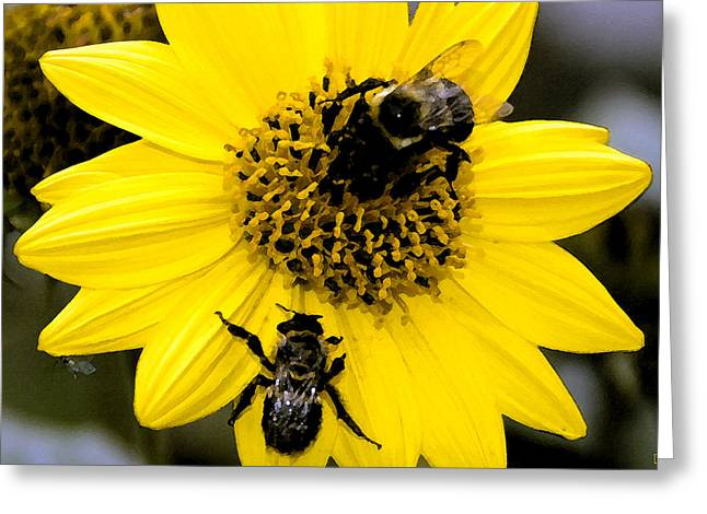 Sweat Digital Art Greeting Cards - Honey bees Greeting Card by David Lee Thompson