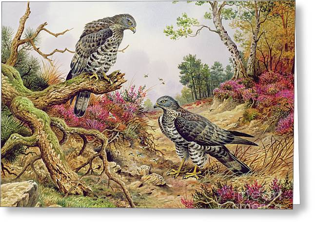 Honey Buzzards Greeting Card by Carl Donner