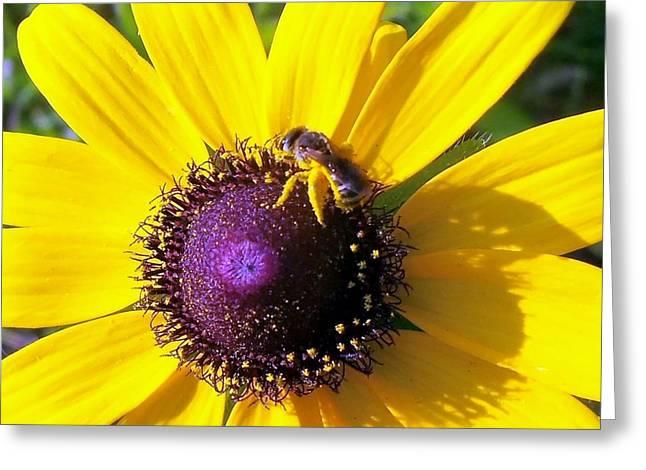 Honey Daisy Greeting Card by Kay Sawyer
