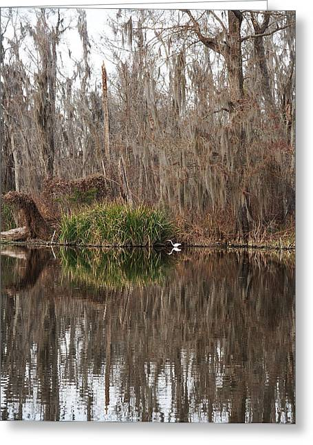 Slidell Greeting Cards - Honey Island Swamp Bird Greeting Card by Bourne Images