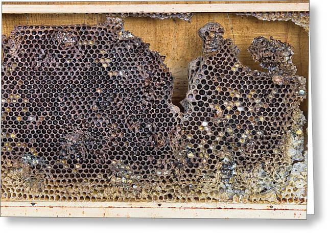 Honeycomb Greeting Card by Tom Gowanlock