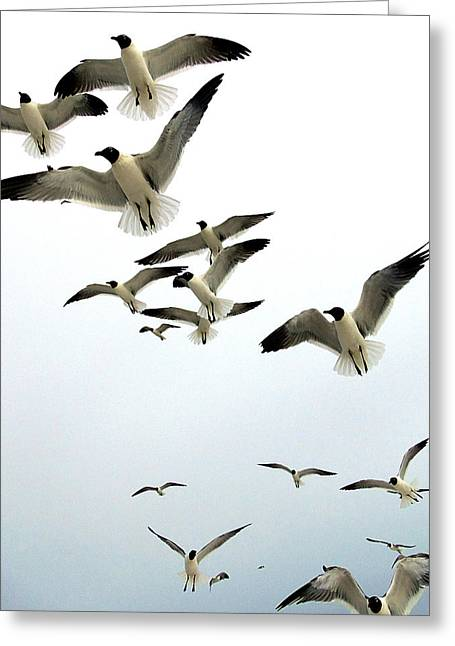 Flying Seagull Greeting Cards - Honeymoon Island Sea Gulls Greeting Card by Chris Mercer