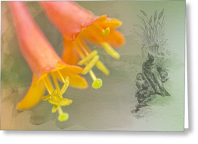 Engraving Greeting Cards - Honeysuckle 2 Greeting Card by Michel Emery