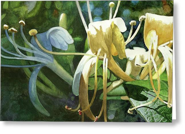 Honeysuckle Sun Greeting Card by Andrew King