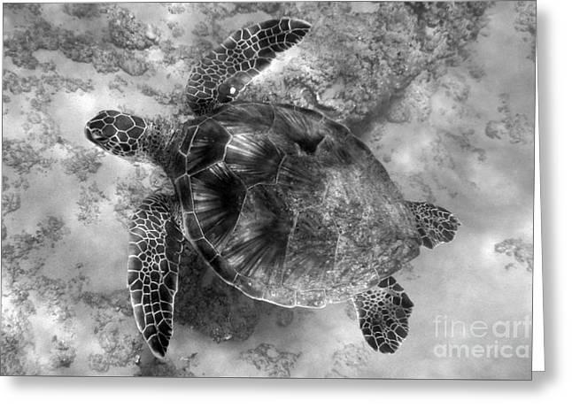 Sea Animals Greeting Cards - Honu Gliding Greeting Card by Jackson Kowalski