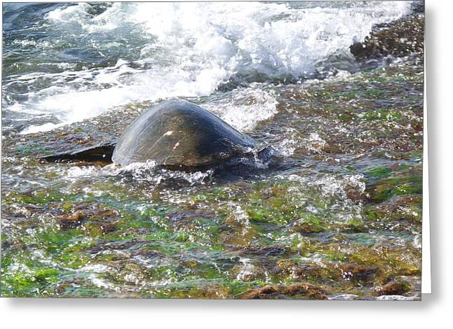 Laniakea Beach Greeting Cards - Honu Waverider Greeting Card by Grant Wiscour
