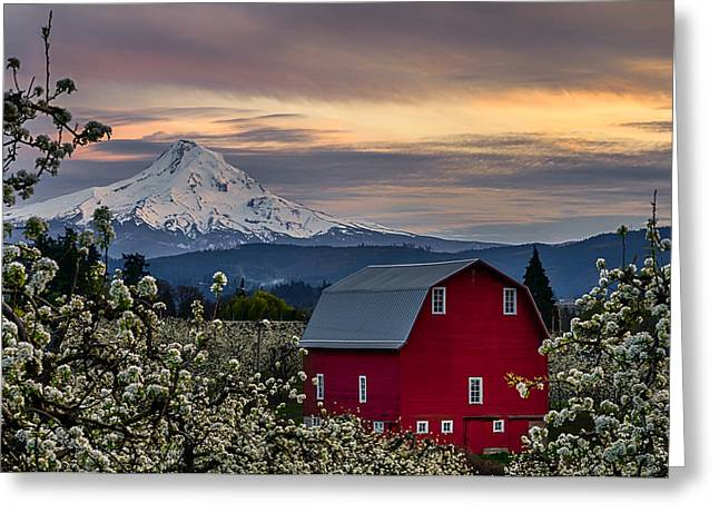 Hood River Pear Orchard Greeting Card by Exquisite Oregon