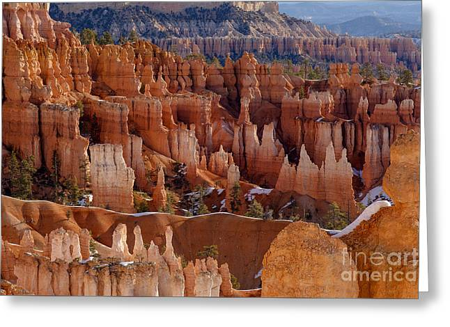 Bryce Greeting Cards - Hoodoos in Morning Light Greeting Card by Jennifer Magallon