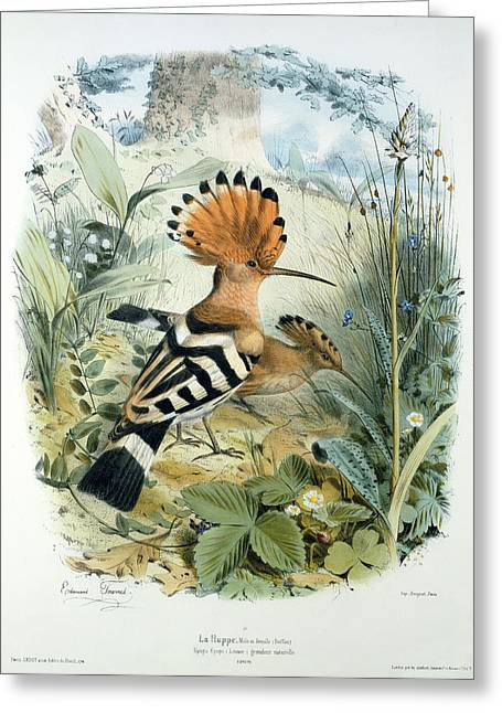 Crest Greeting Cards - Hoopoe Greeting Card by Edouard Travies