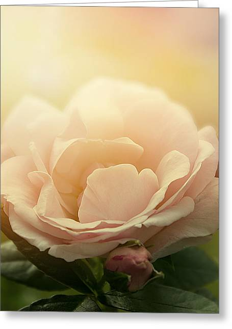 Cindy Grundsten Greeting Cards - Hope Greeting Card by Cindy Grundsten