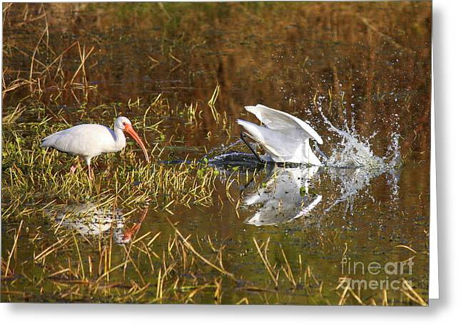 Florida Pond Greeting Cards - Hope You Got That Greeting Card by Carol Groenen