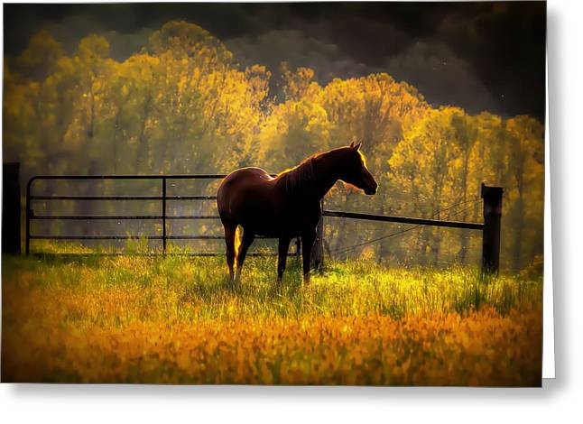 Southern Indiana Greeting Cards - Hopes In The Field Greeting Card by Todd Carter