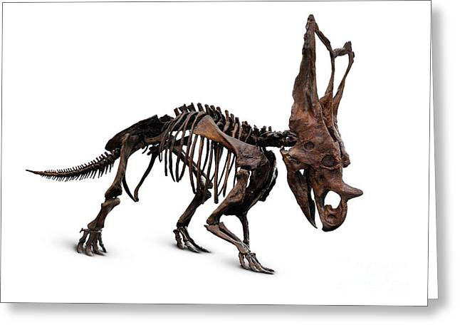 Horned Dinosaur Skeleton Greeting Card by Oleksiy Maksymenko