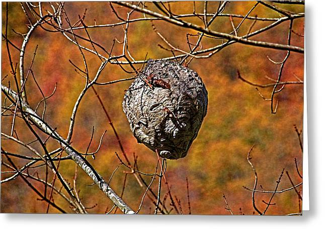 Hornet's Nest Greeting Card by HH Photography of Florida