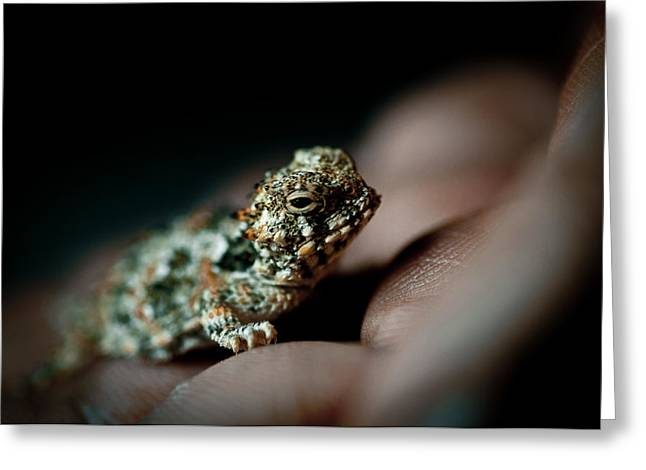 Cold Blooded Greeting Cards - Horny Toad Greeting Card by Neil Ratnavira