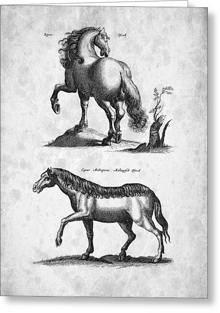 Wild Horse Digital Art Greeting Cards - Horse 02 Historiae Naturalis 1657 Greeting Card by Aged Pixel