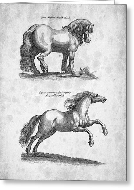 Wild Horse Digital Art Greeting Cards - Horse 03 Historiae Naturalis 1657 Greeting Card by Aged Pixel