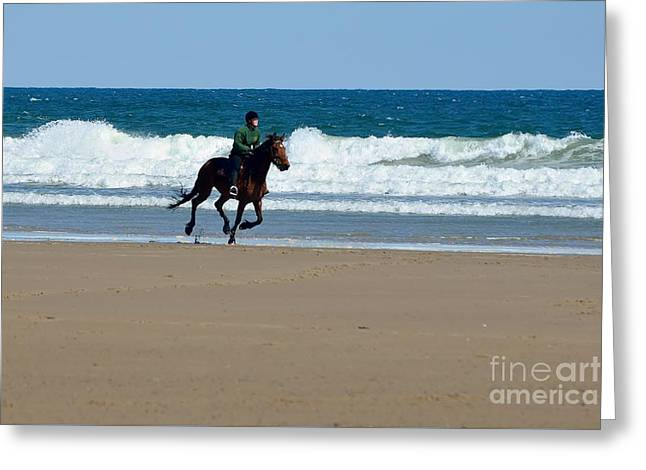 Maine Beach Greeting Cards - Horse and Winter Ocean in Maine Greeting Card by Anne Clark