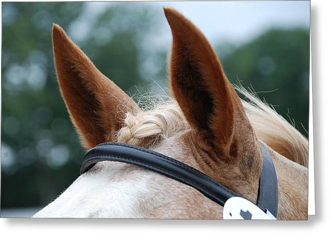 Horse at Attention Greeting Card by Jennifer Lyon