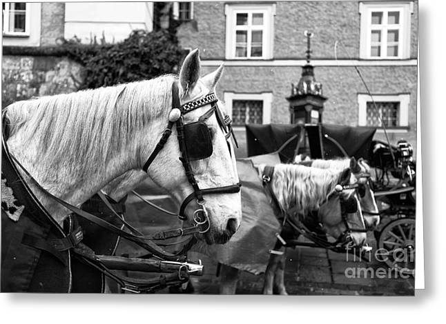 Salzburg Greeting Cards - Horse Blinders  Greeting Card by John Rizzuto