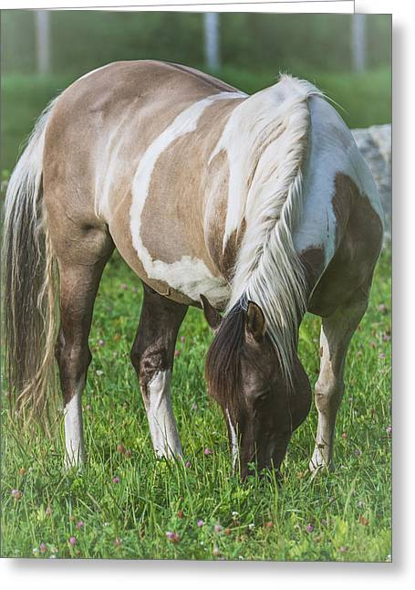 The Horse Greeting Cards - Horse - Bonnie Greeting Card by Black Brook Photography