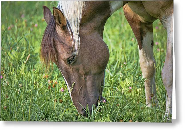 The Horse Greeting Cards - Horse - Bonnie - Close Up Greeting Card by Black Brook Photography