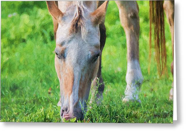 The Horse Greeting Cards - Horse - Clyde - Painted Greeting Card by Black Brook Photography