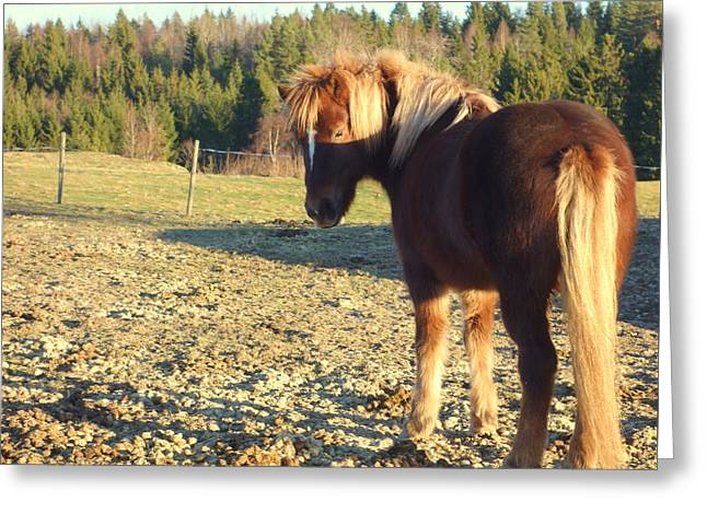Component Greeting Cards - Horse D  Greeting Card by Hilde Widerberg