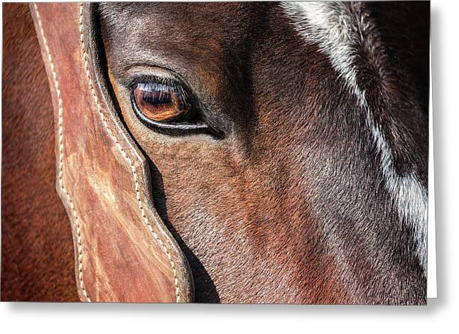Horse Eye Greeting Card by Todd Klassy