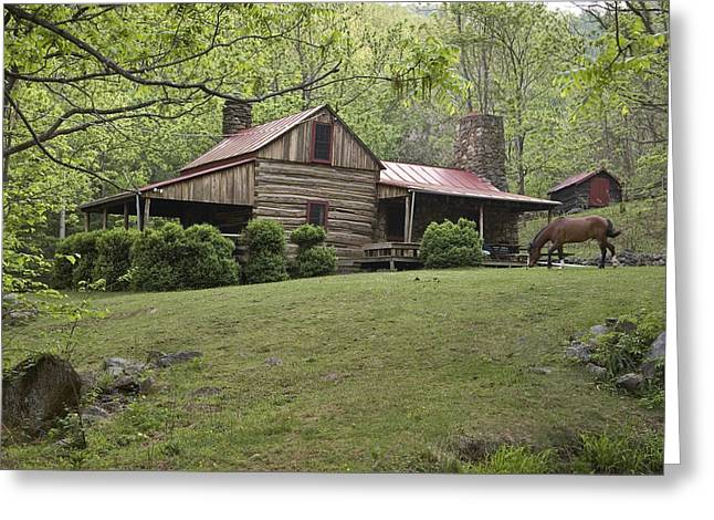 Log Cabins Greeting Cards - Horse Grazing In The Yard Of A Mountain Greeting Card by Greg Dale