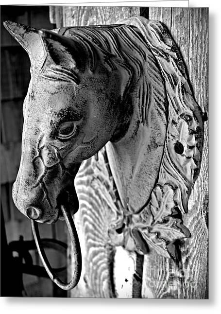 Horse Head Monochrome Greeting Card by Chalet Roome-Rigdon