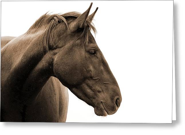 Wild Horses Greeting Cards - Horse Head Study Greeting Card by Heather Swan