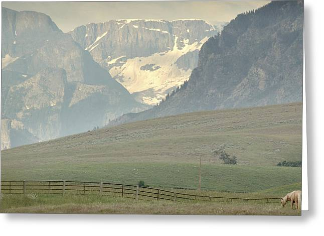 Grazing Snow Photographs Greeting Cards - Horse Heaven.. Greeting Card by Al  Swasey