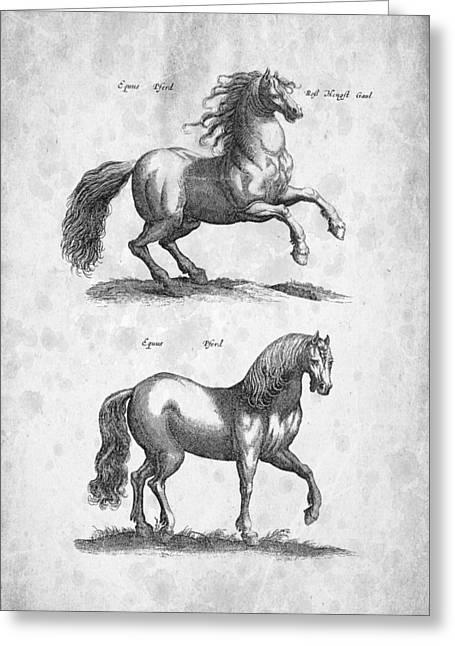 Wild Horse Digital Art Greeting Cards - Horse Historiae Naturalis 1657 Greeting Card by Aged Pixel