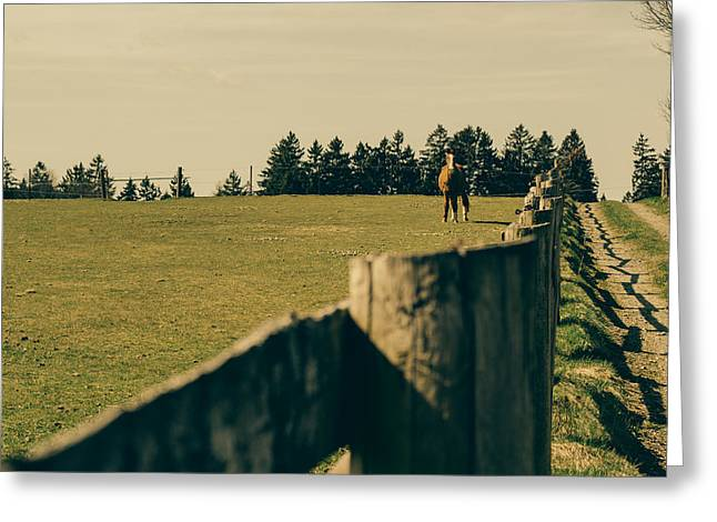 Pastureland Greeting Cards - Horse In A Pasture Greeting Card by Pati Photography