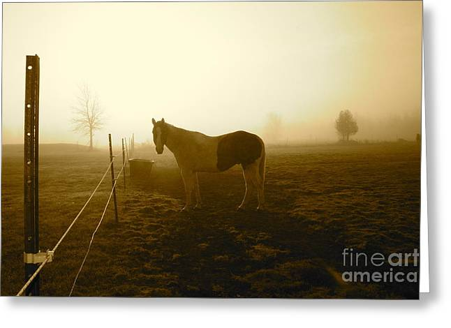 Horse Greeting Cards - Horse in Autumn Photo by Valentina Miletic Greeting Card by Valentina Miletic