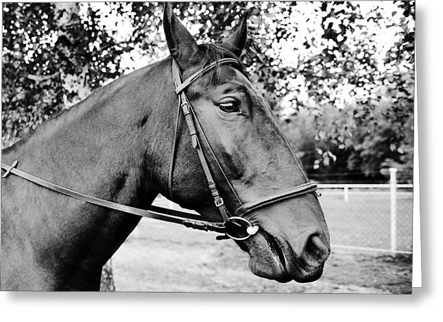Horse In Bridle Portrait Greeting Card by Arletta Cwalina