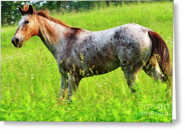 Horse in Pasture Field Greeting Card by Thomas R Fletcher