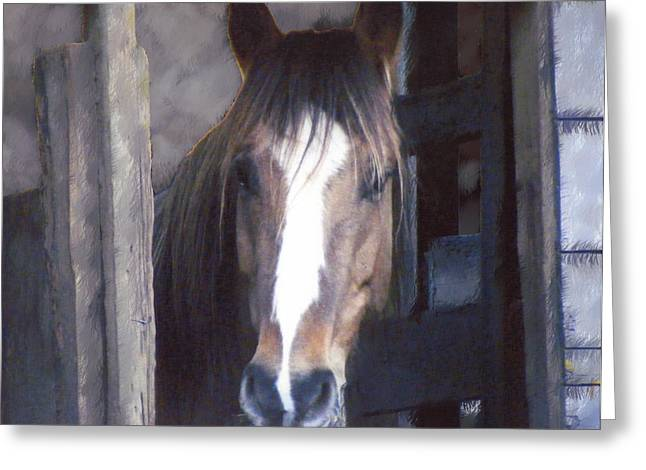 Halinar Greeting Cards - Horse in Stall Greeting Card by Joe Halinar